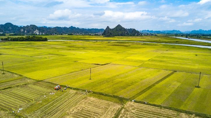 đầu tư bất động sản đất ruộng